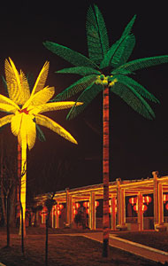 Nazi Palm Tree MWANGA KARNAR INTERNATIONAL GROUP LTD